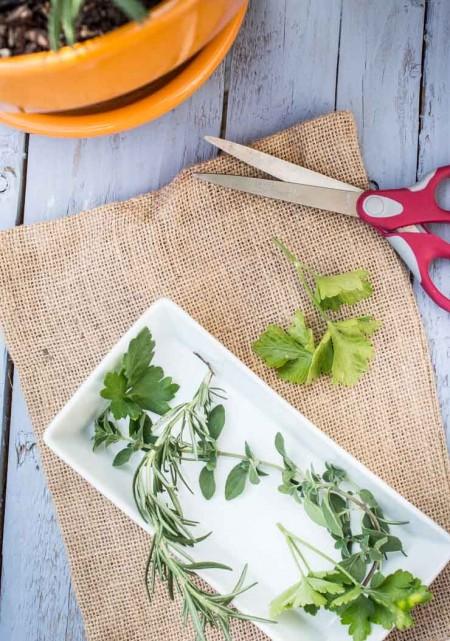 Pruning Fresh Herbs