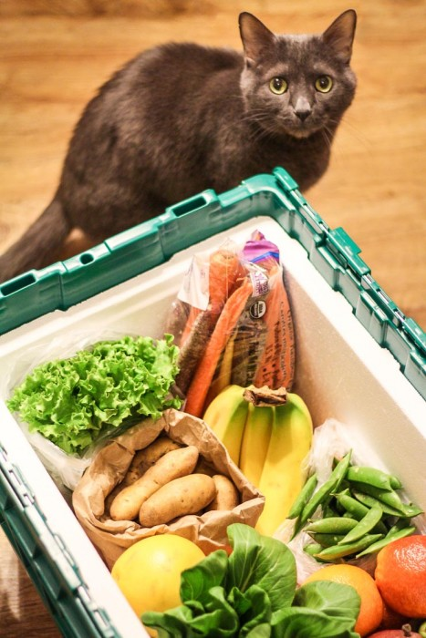 Green BEAN Delivery Box