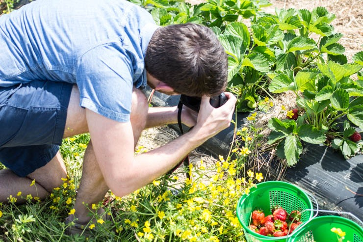 That blog life... Picking local strawberries