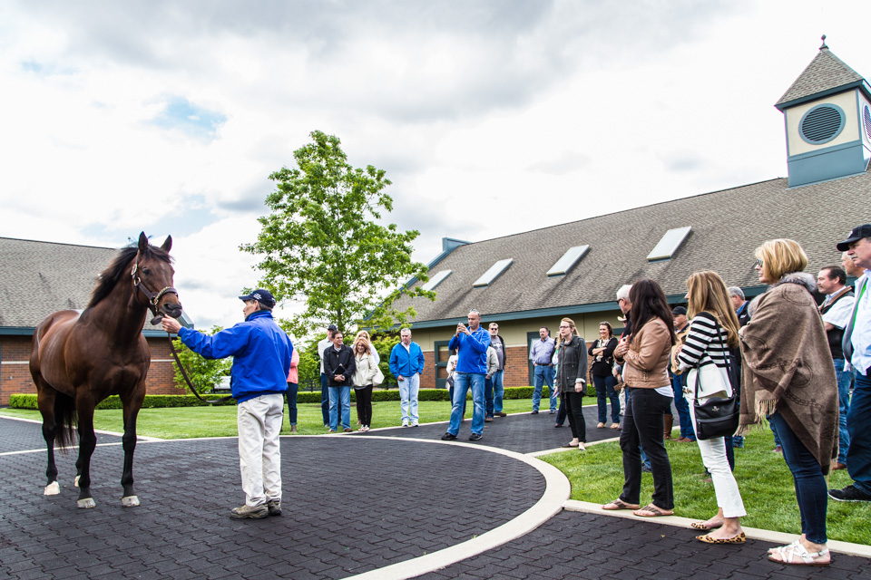Kentucky Derby - Thoroughbred Horse Farm